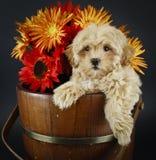 浅黄色的秋天开花小狗甜点 库存图片