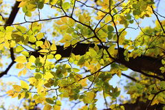 浅绿色的叶子 免版税库存图片