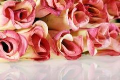 浅dof的玫瑰 免版税库存照片