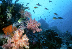 浅maldive的礁石 库存图片