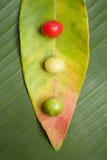 浆果仍然叶子生活 免版税库存照片