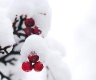 浆果冬天 免版税库存图片