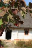 浆果分行guelder上升了 免版税库存图片