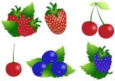 浆果向量 免版税图库摄影