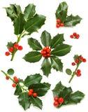 浆果圣诞节绿色霍莉叶子红色枝杈 免版税库存照片