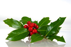 浆果圣诞节装饰霍莉叶子 免版税图库摄影