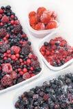 浆果容器冻结的混杂的塑料雪 库存照片