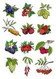 浆果庭院许多设置了通配 免版税库存图片