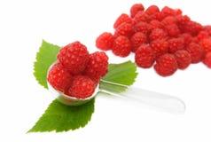 浆果成熟叶子的莓 免版税库存照片