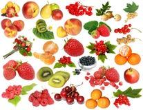 浆果收集果子 免版税库存图片