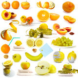 浆果收集果子 免版税库存照片