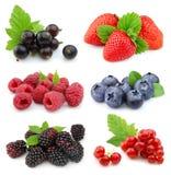 浆果收集甜点 免版税库存照片