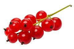 浆果无核小葡萄干查出的红色 免版税库存照片