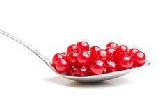 浆果无核小葡萄干红色匙子 库存照片