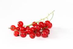 浆果无核小葡萄干红色成熟 免版税图库摄影