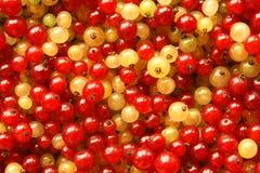 浆果无核小葡萄干红色白色 免版税库存照片