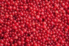 浆果无核小葡萄干红色 库存照片