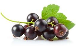 浆果无核小葡萄干绿色叶子 库存照片