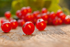浆果无核小葡萄干仍然生活红色 库存图片