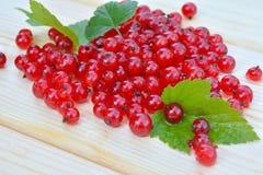 浆果无核小葡萄干仍然生活红色 图库摄影