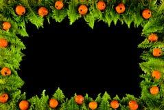 浆果框架青苔 库存照片