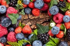浆果森林可实现例证的照片 库存图片