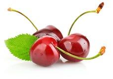 浆果樱桃新鲜的绿色叶子 免版税库存照片
