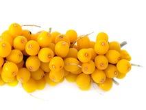 浆果浆果分行鼠李冰柜冻结的海运 库存照片