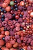 浆果混合 免版税库存图片