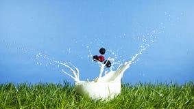 浆果牛奶 免版税图库摄影