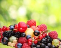 浆果种类  库存照片