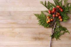 浆果红色冬天 库存图片