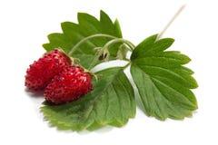 浆果草莓特写镜头 免版税库存图片