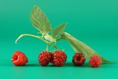 浆果莓一些 库存照片