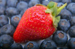浆果蓝色新鲜的草莓 库存照片