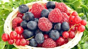 浆果蓝莓无核小葡萄干 图库摄影