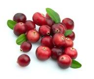 浆果蔓越桔冬天 免版税图库摄影