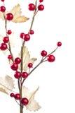浆果装饰生叶红色 库存图片