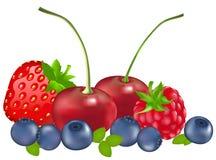 浆果集向量 免版税库存照片