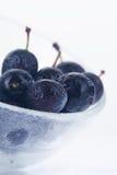 浆果黑刺李 图库摄影