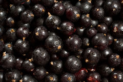 浆果黑色庭院 库存图片