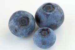 浆果 免版税库存图片