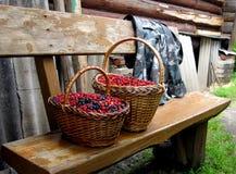 浆果 库存图片