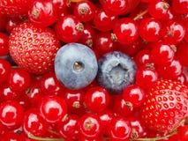 浆果 库存照片