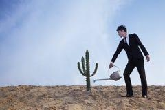 浇灌一个仙人掌的年轻商人在沙漠 库存图片
