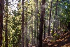 浇灌在一个杉树森林在塞罗de la格洛里亚在圣马丁将军公园- Mendoza,阿根廷 免版税库存图片
