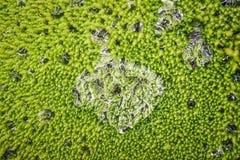 浇灌在一张绿色地毯的下落有青苔的 免版税库存照片