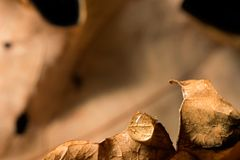 浇灌在一片干燥叶子的下落,宏指令 免版税库存图片