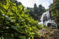 浇灌在位于深雨林密林的春季的秋天。 免版税图库摄影