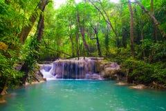 浇灌在位于深雨林密林的春季的秋天 免版税库存图片